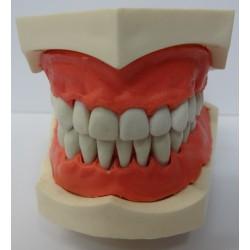 Manequim p/ Dentística 32 Elementos c/ Art. Plástico