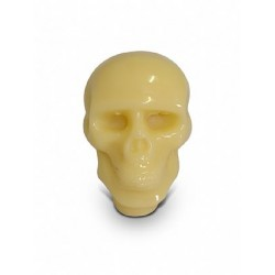 Crânio Médio Transparente