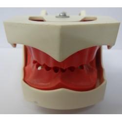 Manequim p/ Endodontia s/ Dentes c/ Art. Plástico