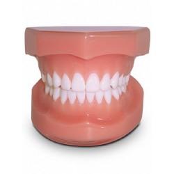 Classe I E-F Rosa Base Rígida c/ Articulador Plástico