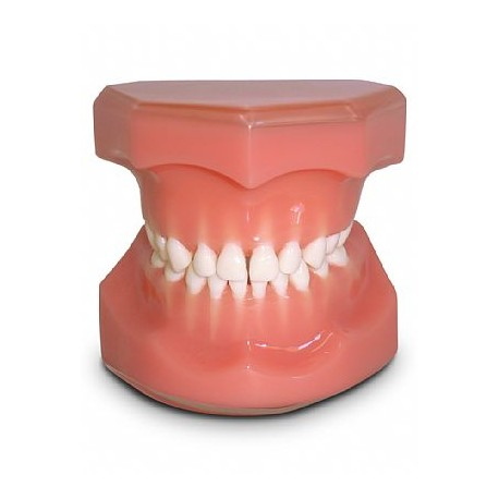 Pediatria 5 Anos Rosa Dentição Decídua